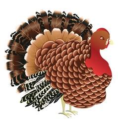 Cartoon Turkey Bird vector image
