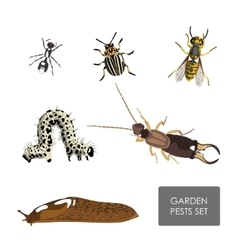 Set of garden pests on a white background vector image vector image