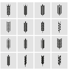 black wheat ear icon set vector image