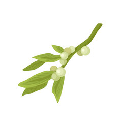 flat icon of mistletoe branch with small vector image