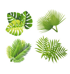 Set tropical green leaves flat style palm leaf vector