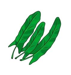 Three green leaves of sorrel vector image
