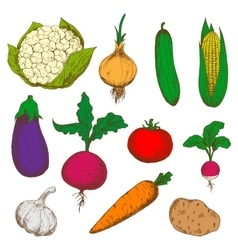Color ripe vegetables sketches set vector image vector image