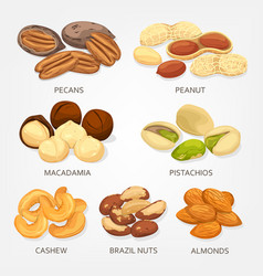 Brazil nuts and cashew fruit seeds grains vector