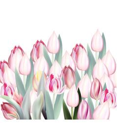 Floral pink tulips on white vector