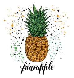 Hand drawn with fresh pineapple vector