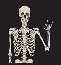 Human skeleton posing isolated over black vector