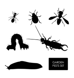 Set of garden pests on a white background vector image