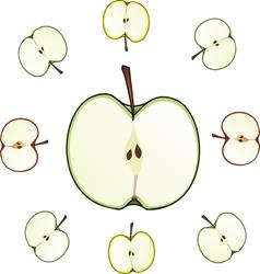 apple cut vector image vector image