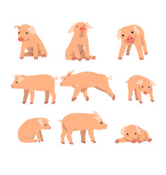 cute little pig set funny piggy in different vector image vector image