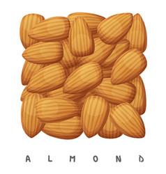almond nuts square icon cartoon vector image