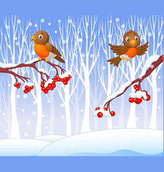 Cartoon funny robin bird on the berry tree vector image