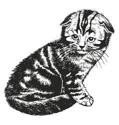 Fold kitten vector