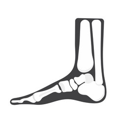 Foot icon radiography and x-ray concept vector