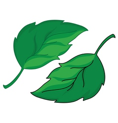 leafs vector image