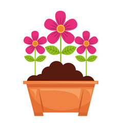 potted flowers natural decoration leaves plant vector image