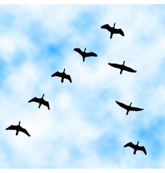 Cormorant flyover vector image vector image