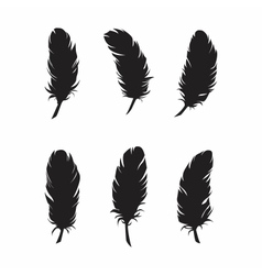 Feathers for design and decoration vector image vector image