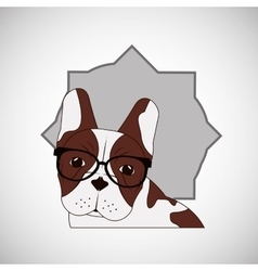 Animal design french bull dog icon Isolated vector image