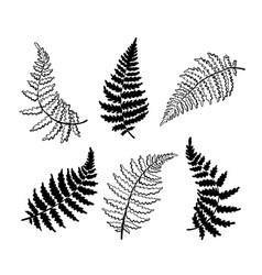 Botanical fern leaf vector