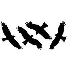 eagle silhouettes 002 vector image