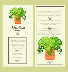 greeting card with adiantum plant vector image