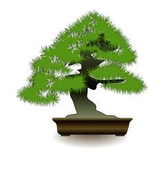 japanese bonsai tree on white background vector image
