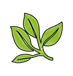 leaves or sprout icon image vector image