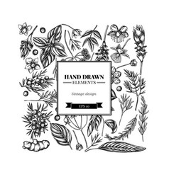 square floral design with black and white angelica vector image