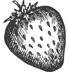 Strawberry hand drawn vector