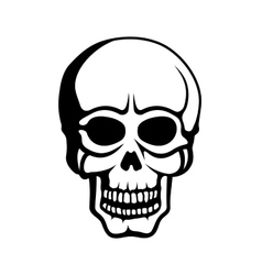 Human Skull on White Background vector image vector image