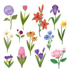 flowers and floral watercolor flowered vector image