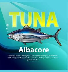 albacore tuna vector image