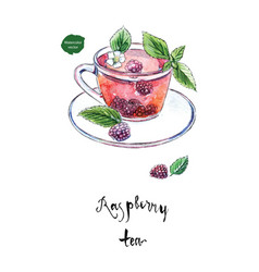 Glass cup of summer raspberry tea watercolor vector