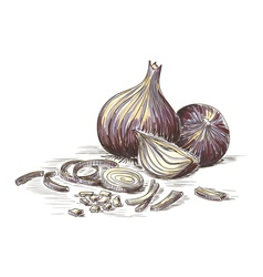 Hand drawn onions vector image