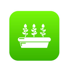 outdoor potted plants icon green vector image