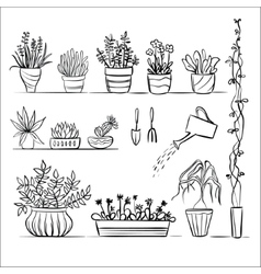 Pot plants and tools sketch vector
