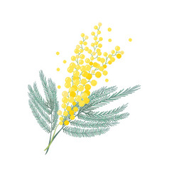 Tender branch mimosa flower womens day sign vector