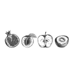 useful fruits set in engraved style vector image
