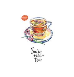 glass cup of salice erba tea in watercolor vector image vector image