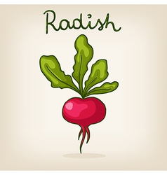 hand drawn shiny radish vector image