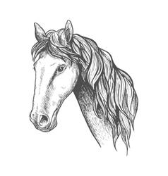 Racehorse of appaloosa breed sketch symbol vector