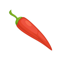 red chili pepper vegetable or culinary spice vector image