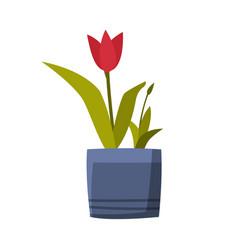 tulip flower in flowerpot flat style vector image