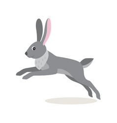 Cute gray jumping rabbit hare isolated on white vector