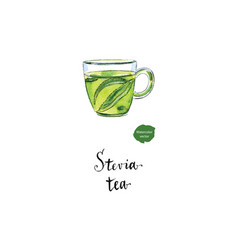 herbal tea in glass cup with stevia watercolor vector image