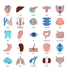 human organs icon set in colored line style vector image