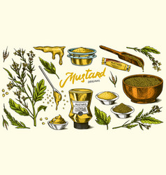 Mustard seeds set spicy condiment seasoning vector