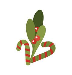 stripped candy cane of holly vector image