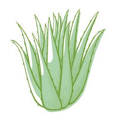 Aloe bush icon green succulent plant or cactus vector
